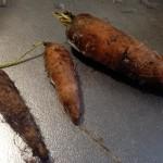 腐らない自然栽培の野菜たち【渋谷農園】