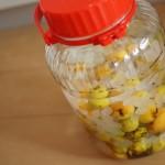 オーガニックの梅で作ってみた!すごい簡単、梅酒の作り方