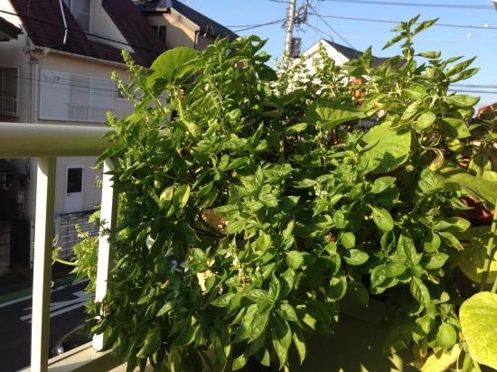 Photo 29-09-2014 06 54 29
