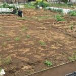 市民農園を借りられたので固定種をメインに自然栽培的+パーマカルチャー要素を入れて畑始めます。